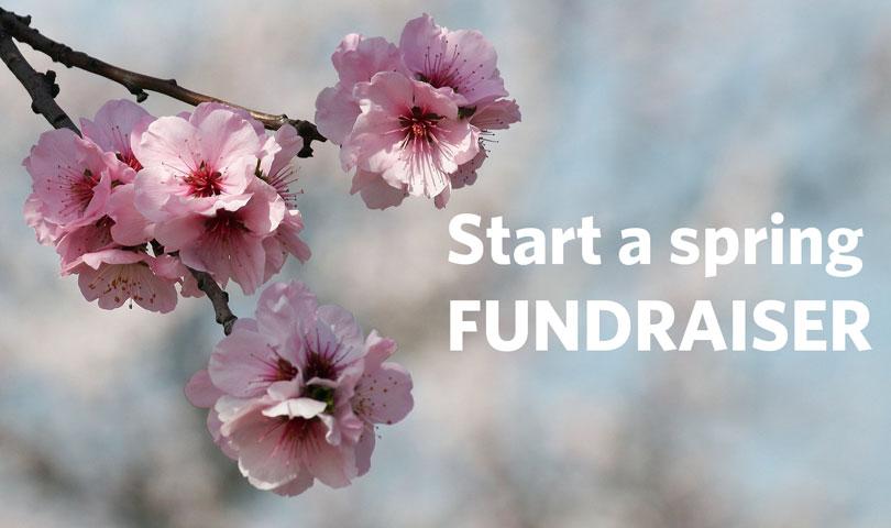 DWYW-spring-fundraiser-header-2.jpg